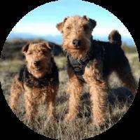 atlas-kiropraktiikka-koirat