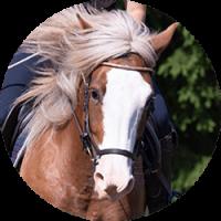 atlas-kiropraktiikka-ruskea-hevonen