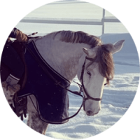 atlas-kiropraktiikka-valkoinen-hevonen